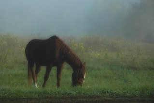 Grazing on a Foggy Morning