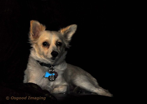 Dog portrait using window light