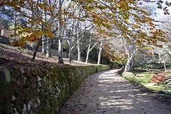 Gardens_Background 19