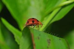 Ladybug inspecting