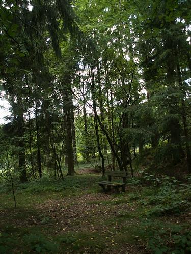 Heimische Kräuter und Tiere im Wald im Vogtland 372