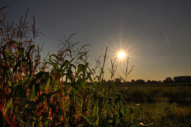 Sonne & Corn