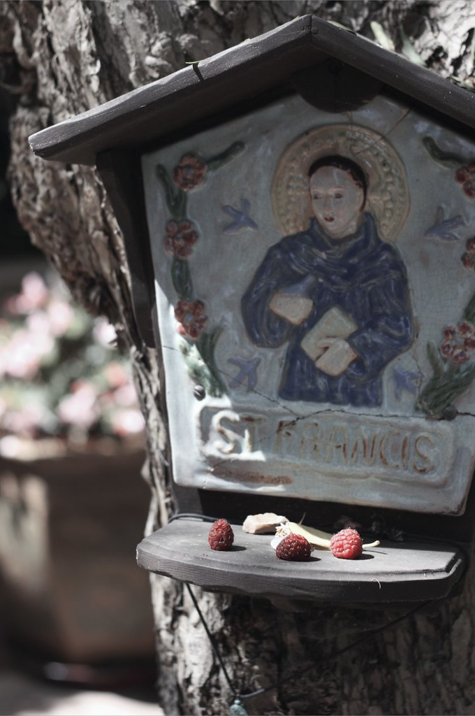 An offering to St. Francis