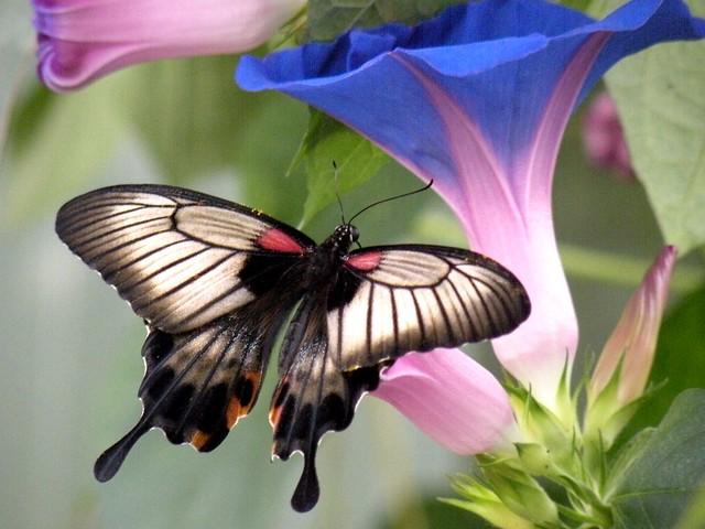 Jardin des Papillons - Grevenmacher - Luxembourg - France