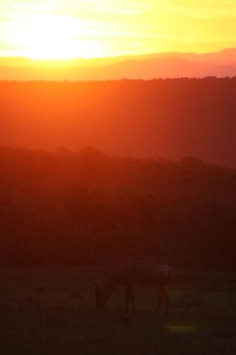 travel sunset nature southafrica safari easterncape hartebeest zuidafrika addoelephantnationalpark gorahelephantcamp oostkaap hunterhotels