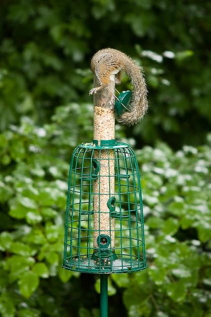 squirrel proof bird feeder day 305 of project 365 - Squirrel Proof Bird Feeders