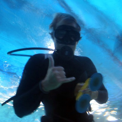 A staff member at the Ocean Center swimming with the Sharks.
