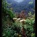 Uganda-rwenzori-forest