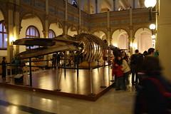 Museo de Historia Natural, Quinta Normal