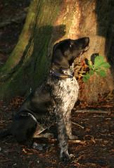 puppy(0.0), animal(1.0), dog(1.0), pet(1.0), mammal(1.0), pointer(1.0),