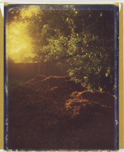 Mulch, at Evening