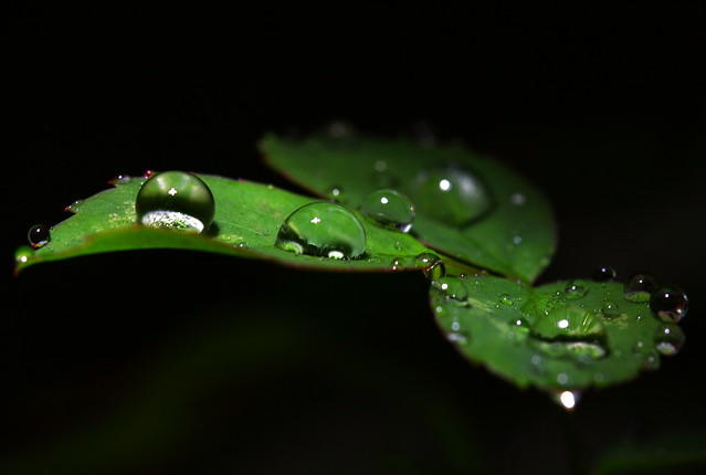 Rain drops keep fallin' on a leaf ♪ ♪ ♪