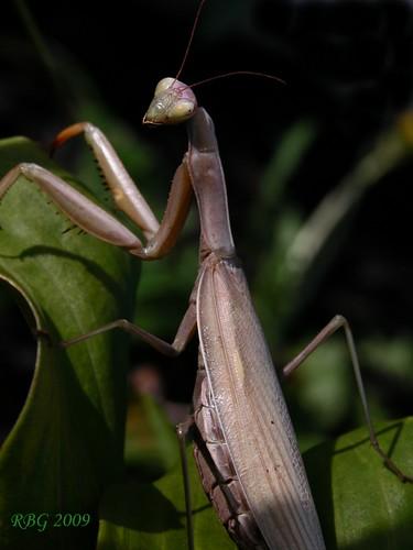 nikon insects 1001nights ineffable cp5700 flickraward dragondaggerphoto