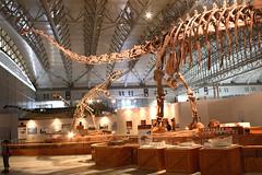 Mamenchisaurus - 02