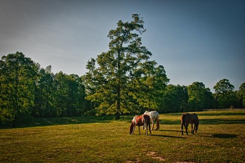 asheville farm southcarolina northcarolina bb bedbreakfast landrum nikond300 barkingfoxfarm