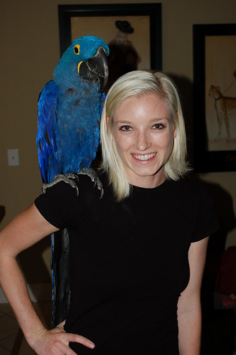 parrot training, training macaws, hyacinth macaws, training hyacinth macaws