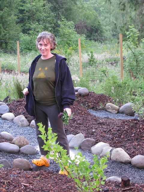 Medicinal Herb Garden Design Photograph img 4655 bina star