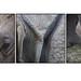 Wildlife_Rhino