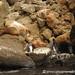 Galapagos Harmony - Sea Lion, Crab and Penguins