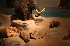 mythology(0.0), carving(1.0), art(1.0), anthropology(1.0), ancient history(1.0), temple(1.0), elephants and mammoths(1.0), sculpture(1.0),