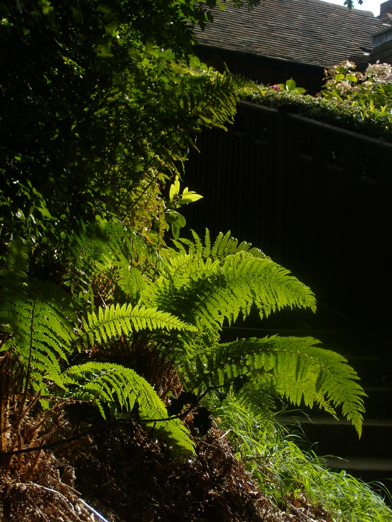 Sunlit fern Edenbridge to Westerham