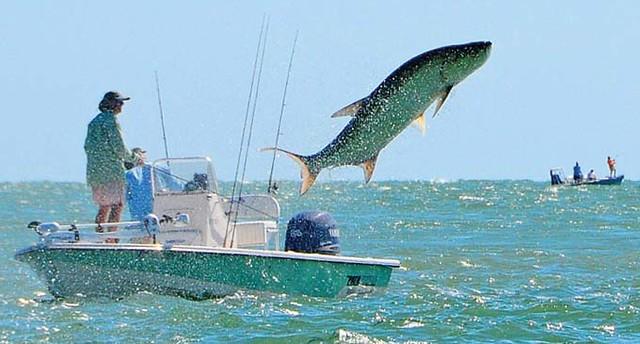 Doa 2008 tarpon jump flickr photo sharing for Longboat key fishing charters