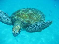 Barbados 2009