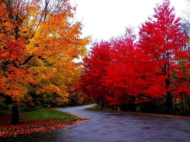 Quebec Autumn Flickr Photo Sharing