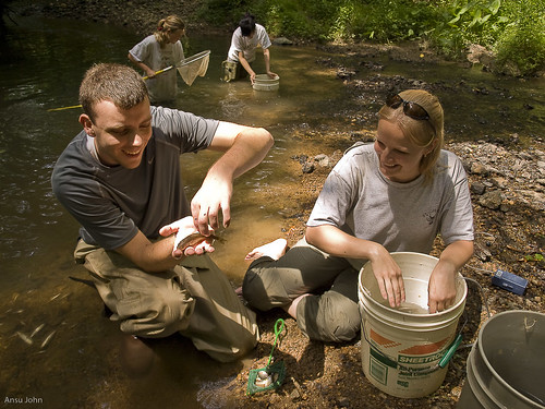 Image of summer monitoring interns collecting samples from a stream.