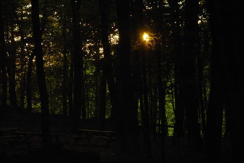 park light sunset shadow sun forrest connecticut utata tarrywile