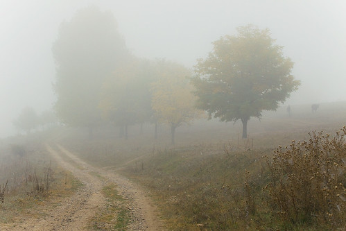 foggy landscape, road, some trees and silhouette of a man and a cow in background