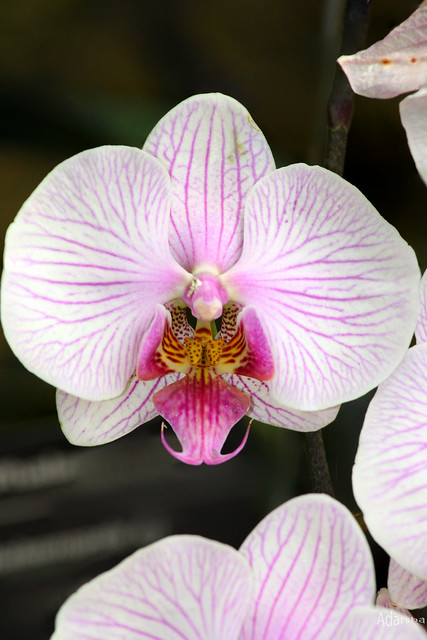 orchids-3