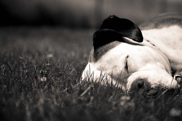 Sleeping Buddy
