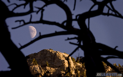trees sunset moon mountains nevada frame mtcharleston