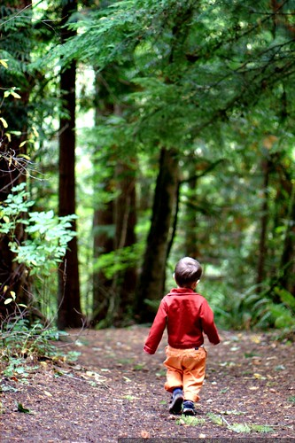 walking into the woods    MG 6524