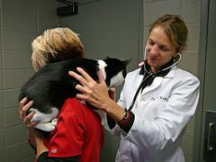 Skeeter at the vet