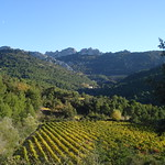 The vineyards of Gigondas
