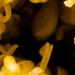 Marigold Flower 4X