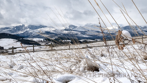 buffalo johnsoncounty wyoming wy bighornmountains winter snow snowy snows cloud clouds landscape landscapes us16 ushighway16 wilderness bighornnationalforest powderriverpass grass grasses mountain mountains sky skies unitedstates