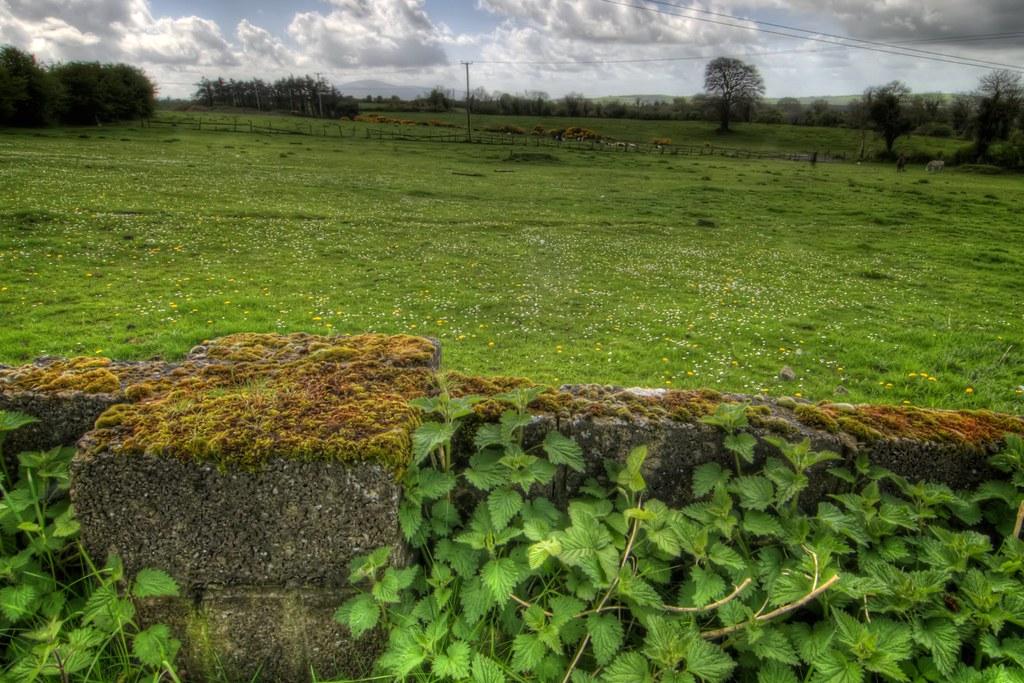 Meadow in Kilkenny County