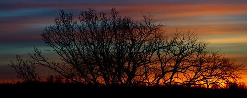 blue trees red sky orange nature clouds sunrise perfectsunsetssunrisesandskys