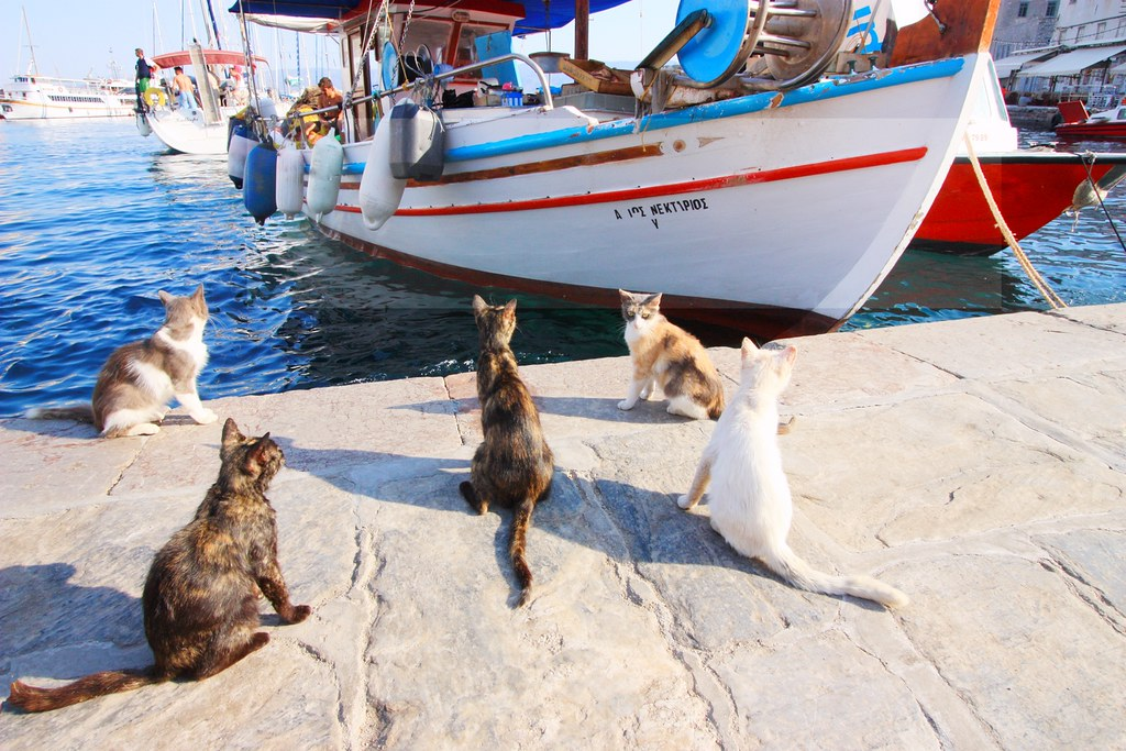 Cats and fishing boat