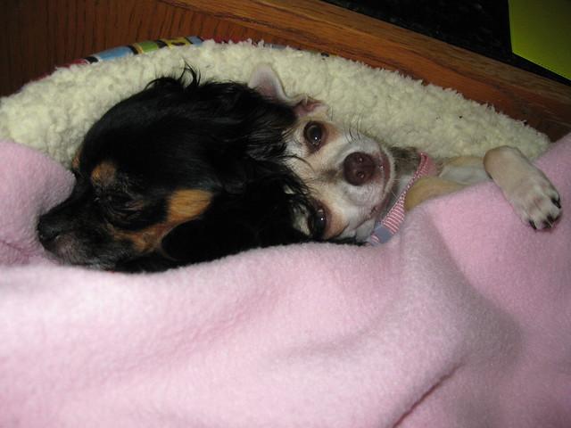 Xoco Snuggling Up to Itzl