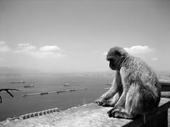 King Of Gibraltar
