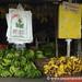 Green and Yellow Bananas - Rivas, Nicaragua