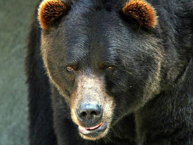 Bear 20090822