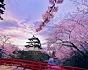 Memories of Spring. Sakura Castle Hirosaki. © Glenn Waters 3,600 visits to this photo. Thank you. Hirosaki Castle. by Glenn Waters ぐれんin Japan.