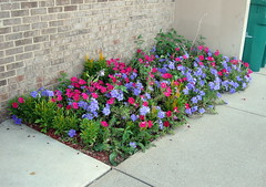 High Rise flower bed.