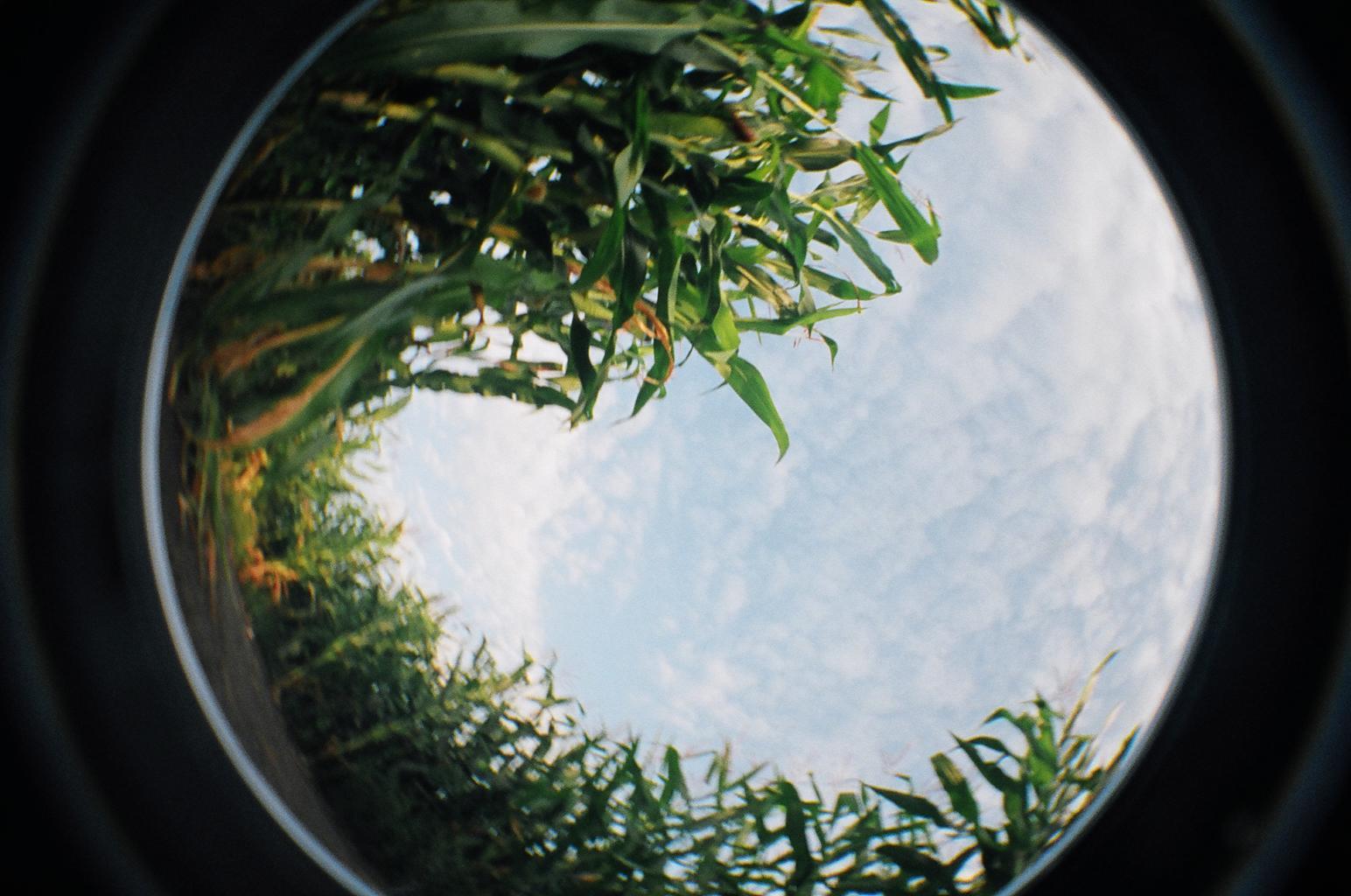 corn wave