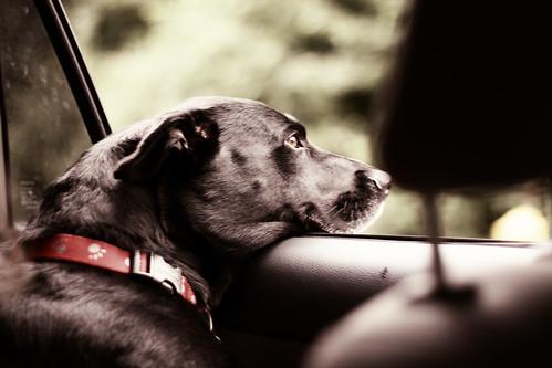 Josie in Car, russet brown version